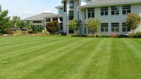 CD Lawn Maintenance & Supply